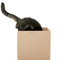 Most cats like boxes, and not just because they're good places to hide.