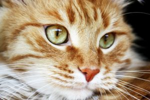 Do cats get lonely when their people are gone all day? Some do, but most don't.