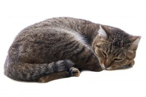 When cats get bored, they might sleep even more than usual.