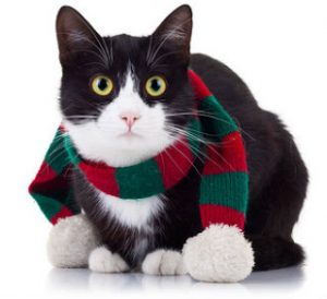 Cats in cold weather know all kinds of ways to stay warm