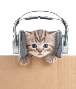 Do Cats Like Music? It Depends On The Music 1