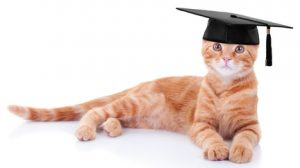 Are cats smart? Most are, although they'll never earn a diploma