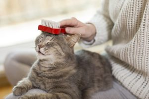 Cats mat for a variety of reasons, but brushing can help prevent tangled fur.