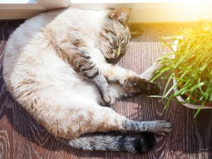 Do cats need sun to be healthy? Not really. But like this cat, they love nothing more than a nap in a sunny spot.