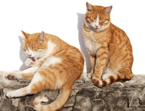Do cats need sun? Not for Vitamin D. But like these two, cats need sunlight to regulate their body temperates and preserve energy when they're sleeping