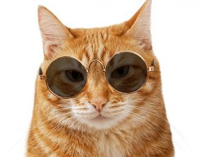 Cats need sun to regulate their body temperatures and stay warm and comfortable. The sunglasses are optional!