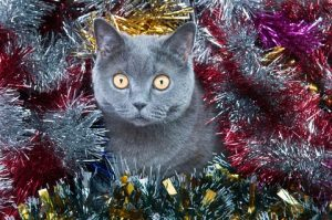 With some planning, you can keep cats off the Christmas tree.