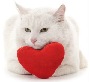 Hearts stuffed with potent catnip make great Valentine gifts for cats.