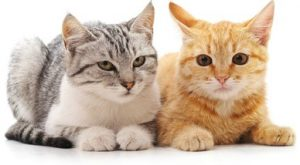s it better to have one cat or two? It depends on the cats' personalities.
