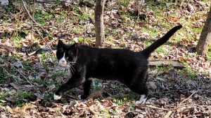 Our lost cat Boccelli in the woods at the Shrine of St. Anthony in Ellicott City, Md.